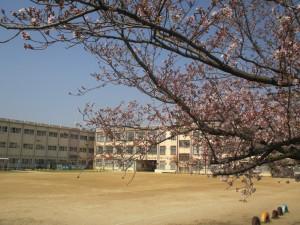 桜 (6)
