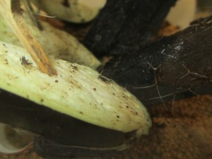 鈴虫 (2)