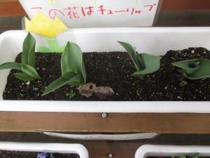 咲いたかな (6)