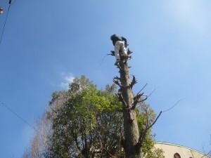 290228 木の伐採 (1)